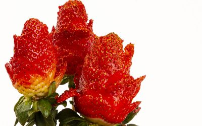 Rosas con fresas Miguelito